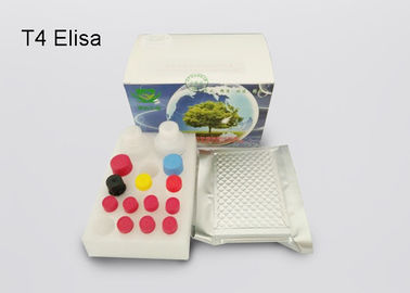 China Thyroxine T4 Elisa Diagnostic Kits Plasma Sample With 2 Standard Curve Ranges supplier
